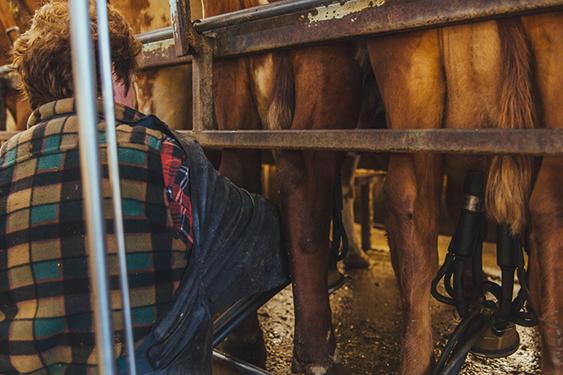 Mitta valley dairy farmer